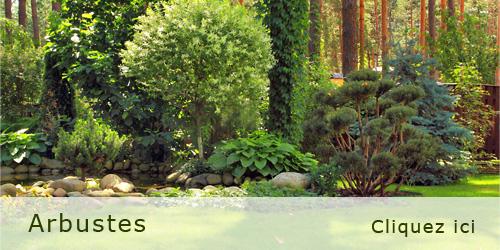 P pini res hamblenne p pini re plantes vivaces arbres for Catalogue plantes et arbustes
